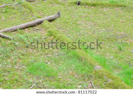 tree covered by moss carpet - stock photo