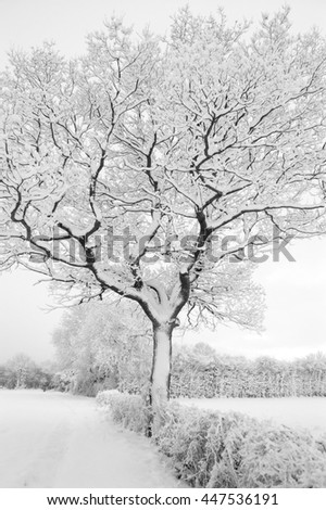 Tree covered in snow, England UK