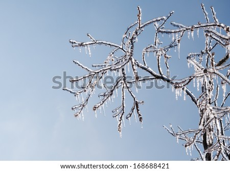 Tree covered in thick, glittering ice after an ice storm, with sun starting to melt the icicles - stock photo