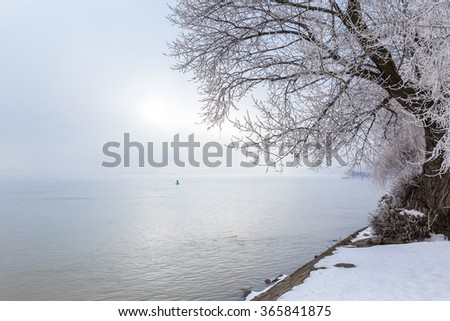 Tree covered with snow near the river
