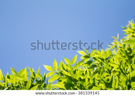 Tree crown against blue sky and a lot of copy space. - stock photo