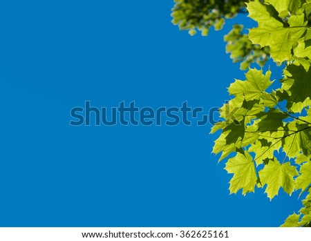 Tree crown against blue sky and a lot of copy spase. - stock photo