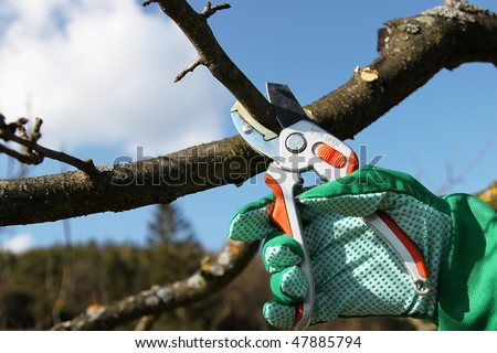 Tree cutting with a secateurs