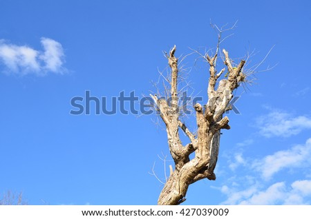 tree dead old blue nature background wallpaper death brown clouds color
