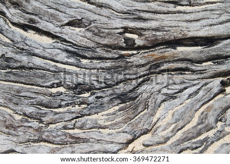 Tree detail at a beach in Denmark - stock photo