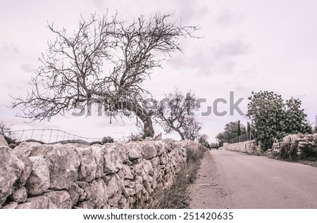 Tree empty country road Mallorca in October. Outside Santanyi, Mallorca, Balearic islands, Spain in October. - stock photo