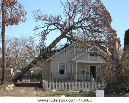 Tree Fall - stock photo