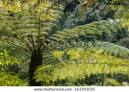 tree fern - stock photo