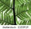 tree fern macro in lush green tone - stock photo