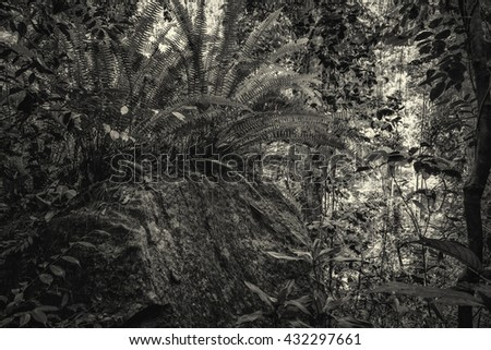Tree ferns in tropical jungle - stock photo