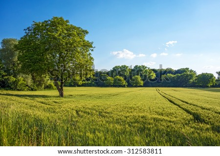 Tree, field, meadow and forest - blue sky - stock photo
