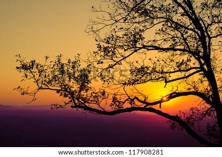 Tree Filled Sunset - stock photo