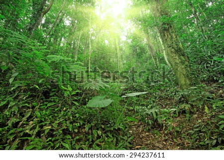 tree forest during spring  - stock photo