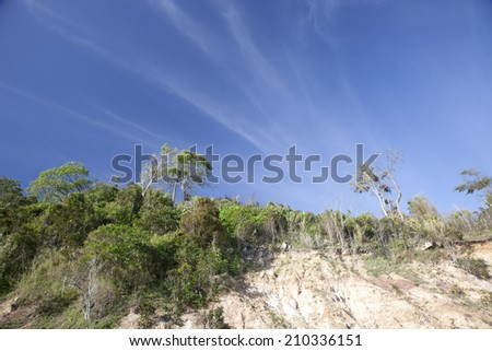 Tree forest under blue sky - stock photo