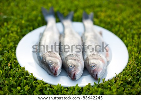 Tree fresh fishes on the plate - stock photo