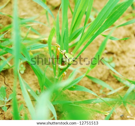 Tree frog in a field - stock photo