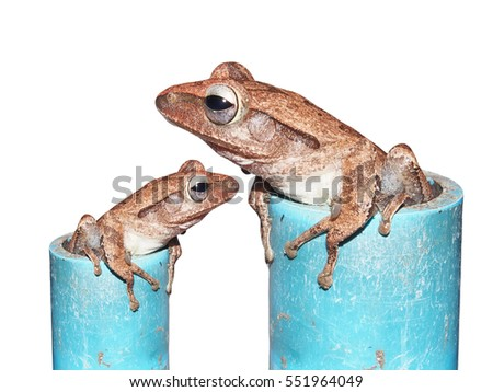 tree frog in pipe