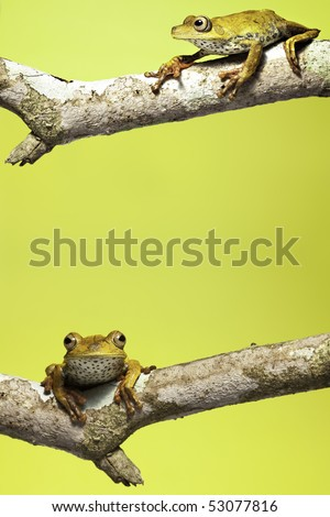 tree frog on branch yellow background with copy space
