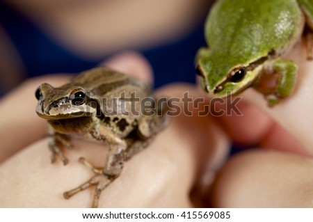 Tree frogs, shallow depth of field  - stock photo