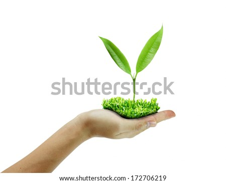 tree green fresh in  hand isolated on white background