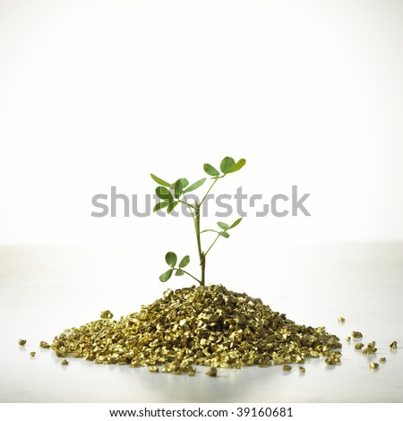 Tree grow on gold. Concept of development, growth, fortune, accumulation
