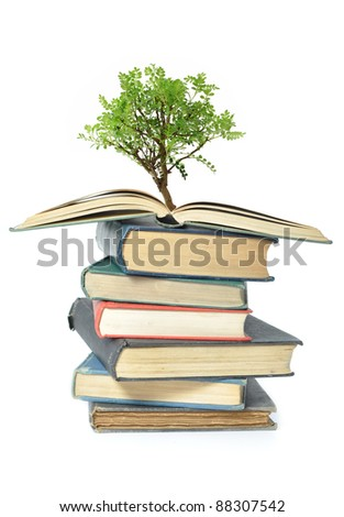 Tree growing from book - stock photo