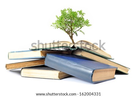 Tree growing from books  - stock photo