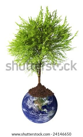 Tree growing from earth
