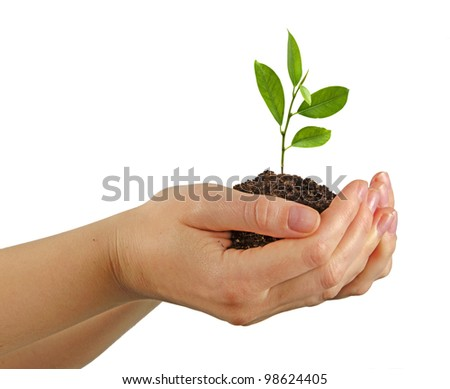 Tree growing from soil