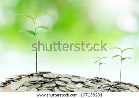 Tree growing in coins with green background - stock photo
