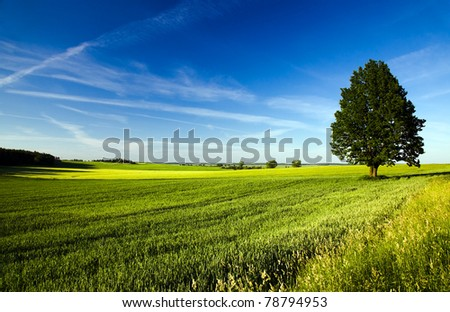 Tree growing in the field on which grow up cereals - stock photo