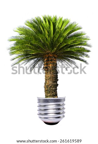 tree growing inside the light bulb - stock photo