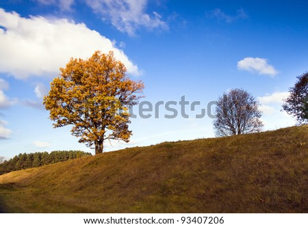 Tree growing on a height. An autumn season - stock photo