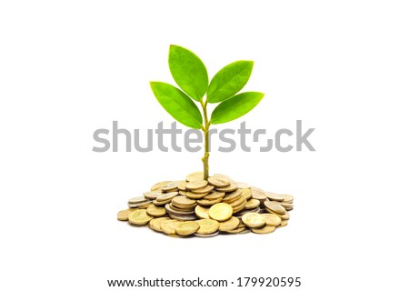 tree growing on a pile of golden coins / csr / sustainable development / tree growing on stack of coins / saving - stock photo
