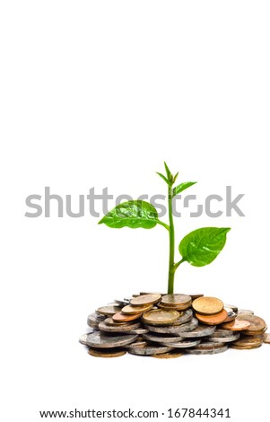 tree growing on coins / csr/ sustainable