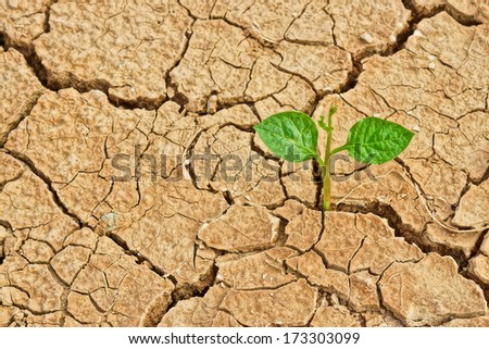 tree growing on cracked earth / growing tree / save the world / environmental problems / cut tree / natural destruction