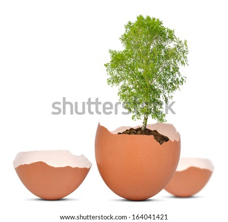 Tree growing out of the egg isolated on white.New life concept.