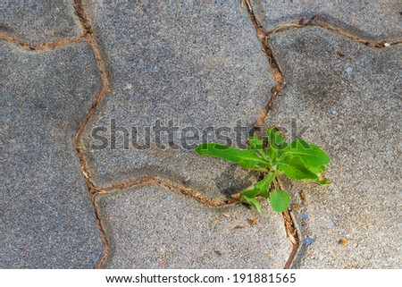 Tree growing through crack - stock photo