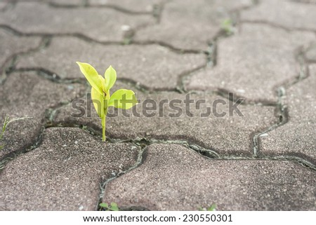 tree growing through crack in pavement - stock photo