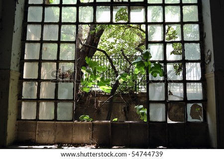Tree growing through the broken windows of an abandoned factory. - stock photo