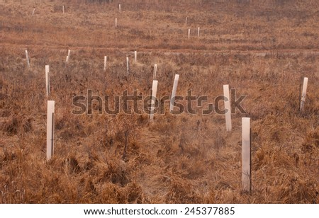 Tree guards protecting bark of young saplings from deer in a park meadow - stock photo