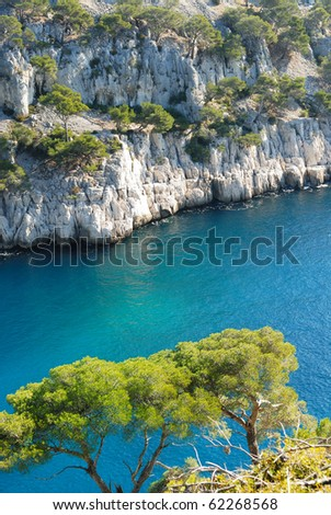 Tree hanging onto cliff at Calanque d'en Vau, between Marseille and Cassis, Provence, France - stock photo