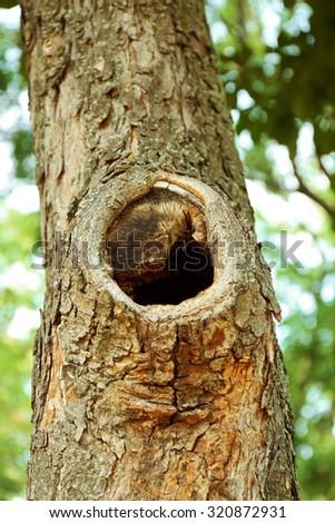 Tree hollow close up - stock photo