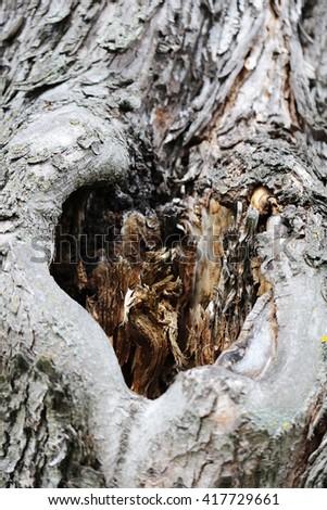 Tree hollow heart shape close up - stock photo