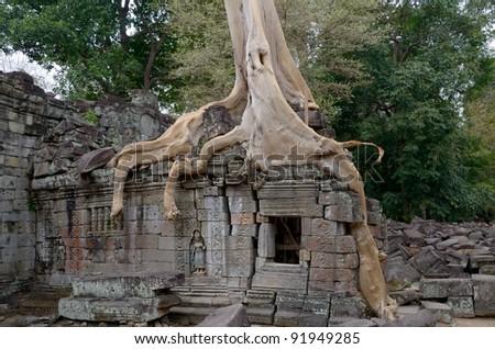 Tree house in Angkor wat - stock photo