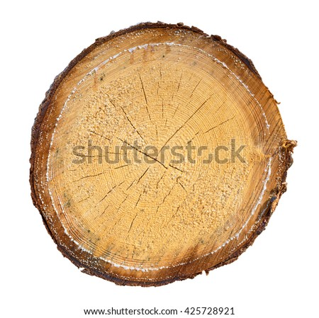 tree in a cut on a white background - stock photo