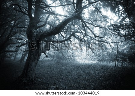 tree in a dark forest - stock photo