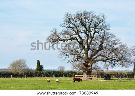 Tree in a farm paddock with cows and sheep - stock photo