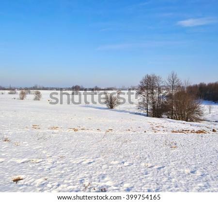 tree in a field in winter - stock photo