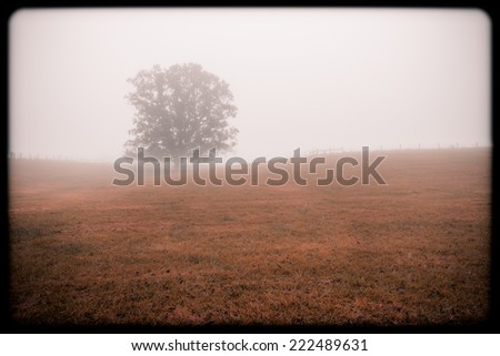 Tree in a Field, Instagram Style - stock photo